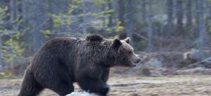 Techniques to survive the bear market