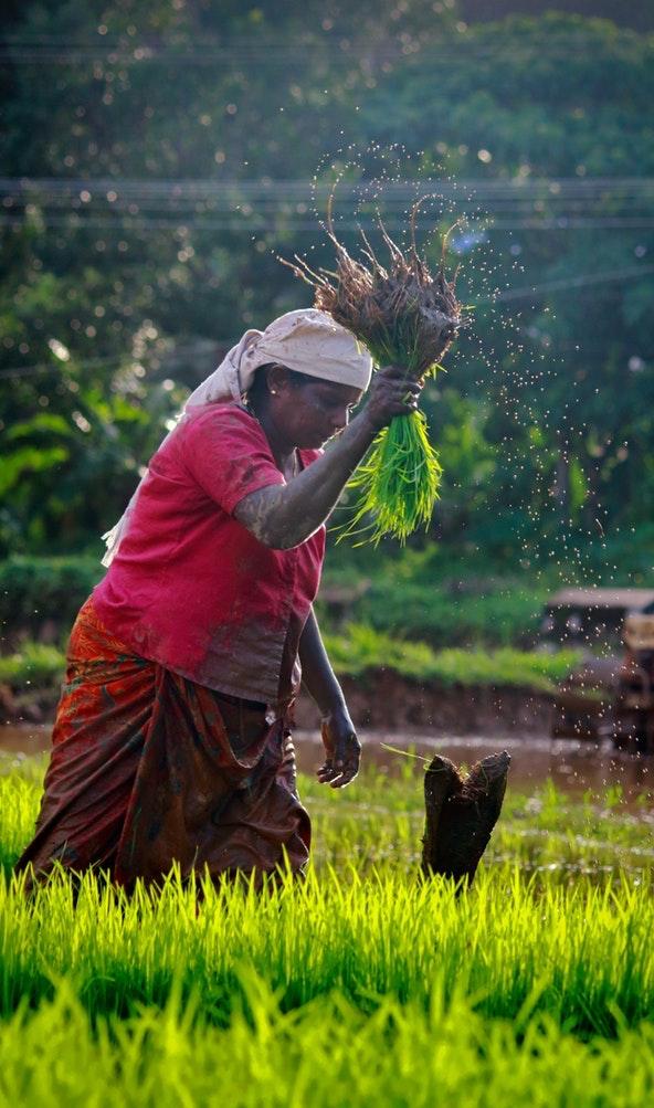 farm woman upl